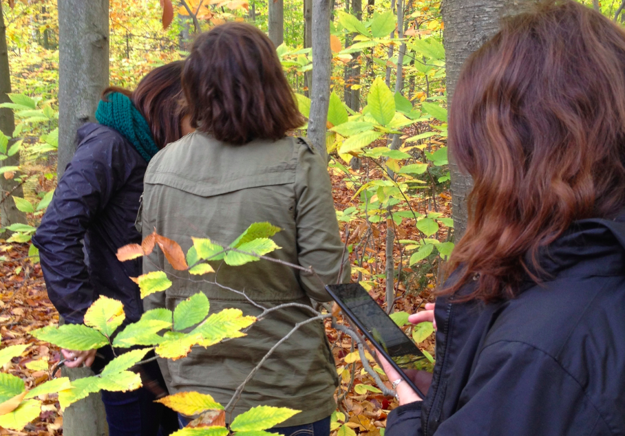 Using tablets for research in the forest.